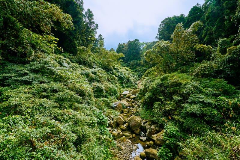 Paisaje verde hermoso del río a través del bosque en área de la educación de la naturaleza de Xitou imagen de archivo