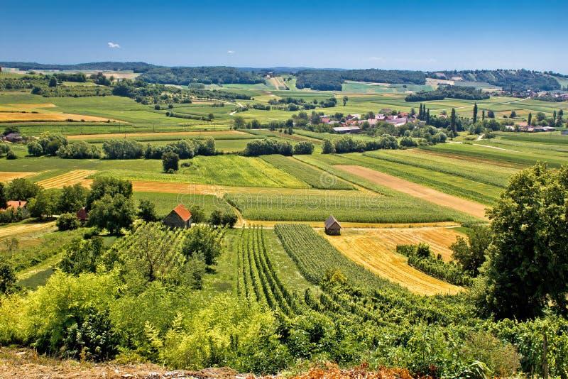 Paisaje verde hermoso en área del viñedo de Kalnik fotografía de archivo