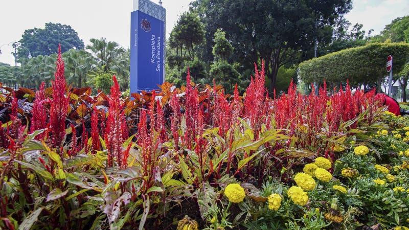 Paisaje verde hermoso en Putrajaya Malasia imagen de archivo libre de regalías