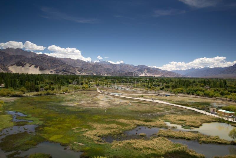 Paisaje verde impresionante del pantano en Leh, la India fotografía de archivo libre de regalías