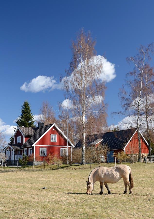 Paisaje vertical sueco idílico imágenes de archivo libres de regalías