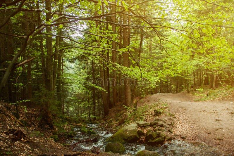 Paisaje vivo del bosque La luz de la mañana cae en una trayectoria de bosque fotos de archivo libres de regalías