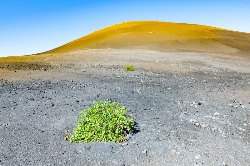 Paisaje vulcanic que sorprende de la caldera de los Cuervos, parque nacional de Timanfaya, Lanzarote, islas Canarias, España fotografía de archivo libre de regalías