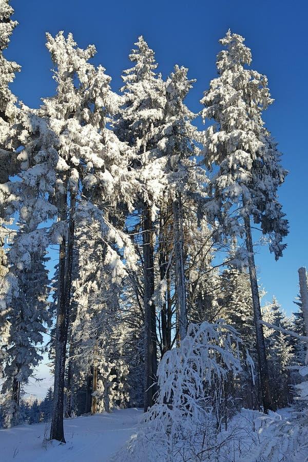 Paisaje y árboles del invierno fotos de archivo libres de regalías