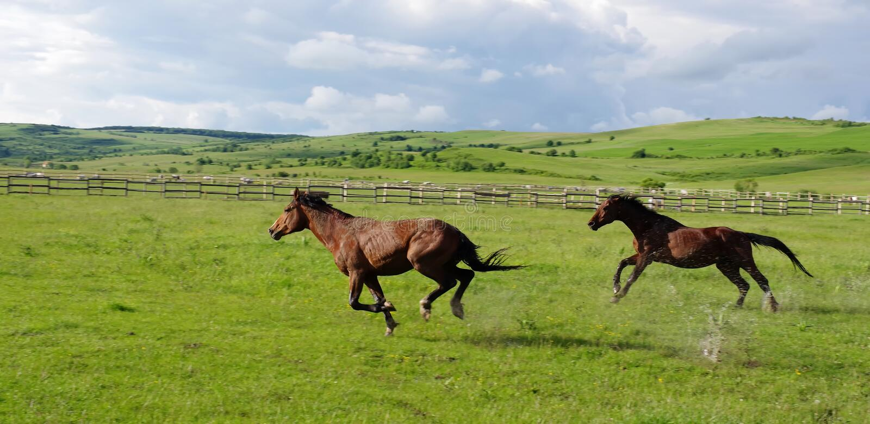 Paisaje y funcionamiento de los caballos fotografía de archivo