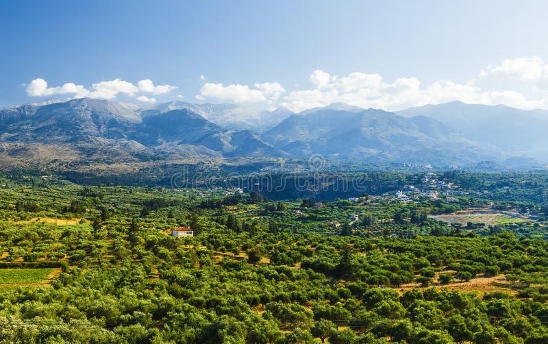 Paisaje y Olive Groves en Creta del sur La agricultura y Olive Groves determinan la imagen en la isla foto de archivo libre de regalías