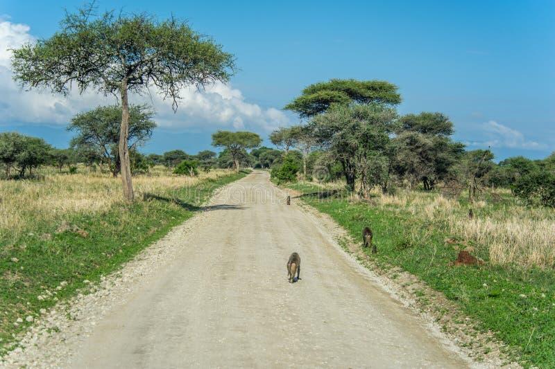 Paisajes africanos - Tarangire NP Tanzania imagen de archivo