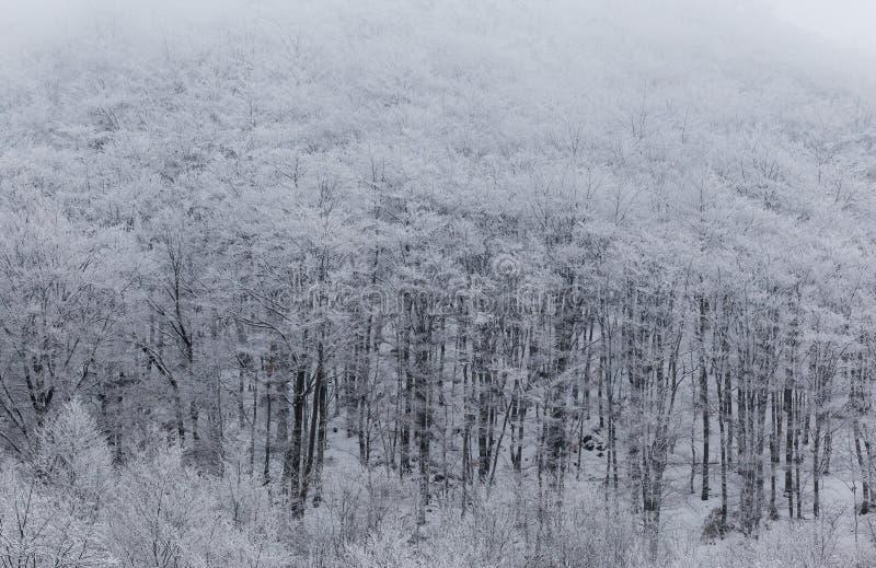 Paisajes congelados en un día muy frío en las montañas de Rumania imagen de archivo libre de regalías