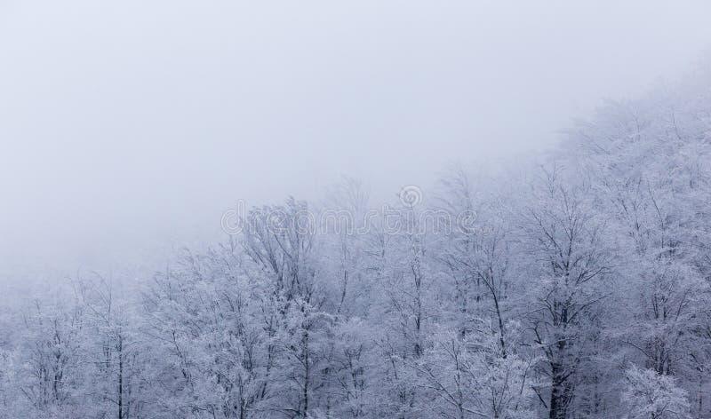 Paisajes congelados en un día muy frío en las montañas de Rumania fotografía de archivo libre de regalías