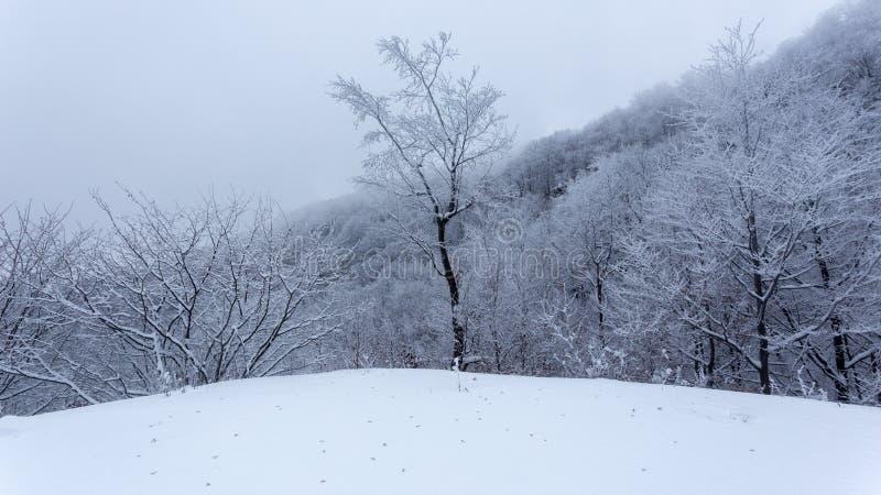 Paisajes congelados en un día muy frío en las montañas de Rumania fotografía de archivo