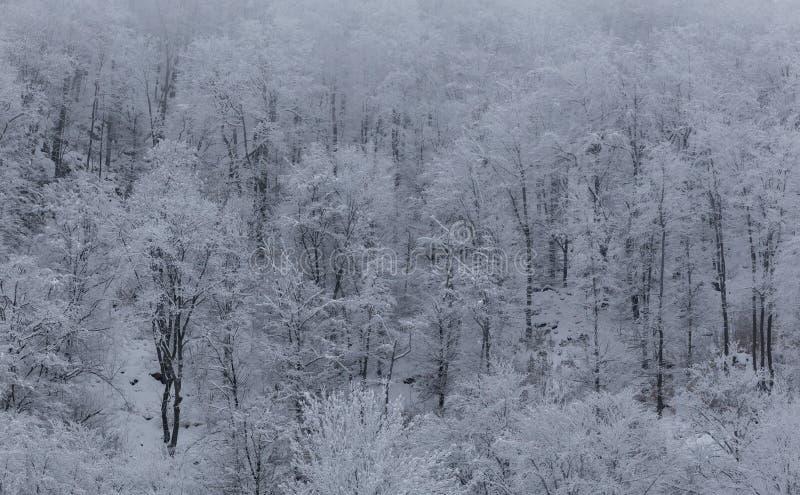 Paisajes congelados en un día muy frío en las montañas de Rumania fotos de archivo