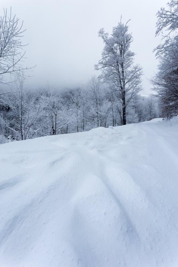 Paisajes congelados en un día muy frío en las montañas de Rumania foto de archivo