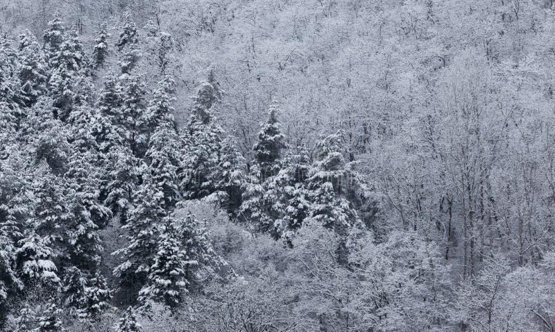 Paisajes congelados en un día muy frío en las montañas de Rumania foto de archivo libre de regalías
