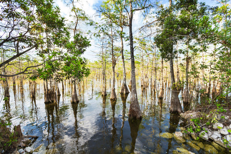 Paisajes de la Florida imagenes de archivo