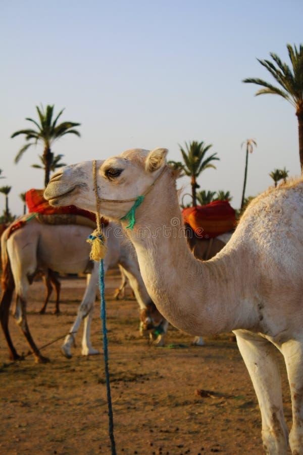 Paisajes de la naturaleza de Marrakesh en Marruecos, África Desierto y montañas Viaje Marruecos wanderlust foto de archivo libre de regalías