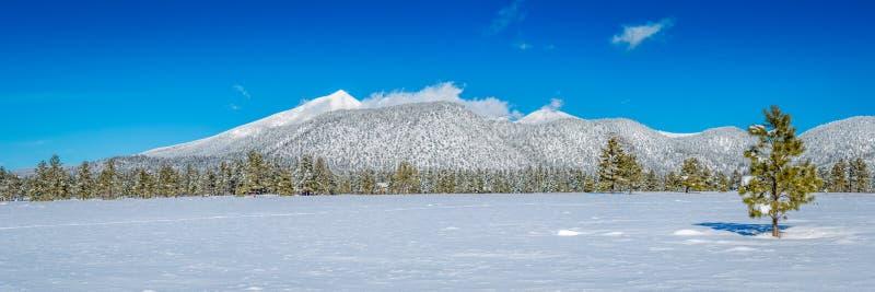 Paisajes de la nieve del invierno de Arizona fotografía de archivo