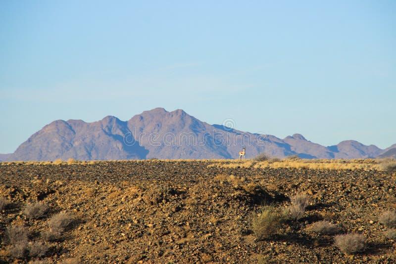 Paisajes del desierto con las monta?as en el sur de Namibia y de dos p?jaros amarillos discretos La estaci?n seca fotos de archivo libres de regalías