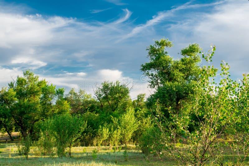 Paisajes hermosos de Rusia Región de Rostov Lugares coloridos Vegetación y ríos verdes con los lagos y los pantanos Bosques y mea imágenes de archivo libres de regalías