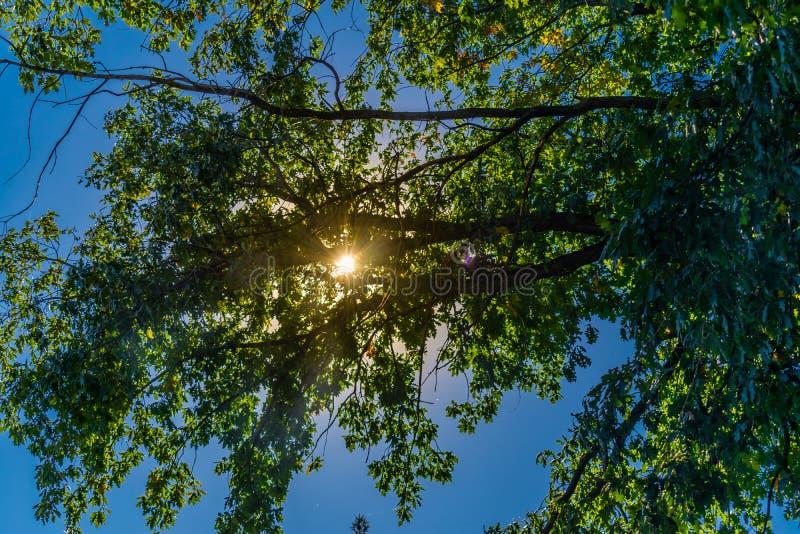 Paisajes hermosos de Rusia Región de Rostov Lugares coloridos Vegetación y ríos verdes con los lagos y los pantanos Bosques y mea fotografía de archivo