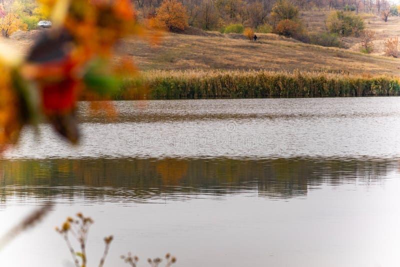 Paisajes hermosos de Rusia Región de Rostov Lugares coloridos Vegetación y ríos verdes con los lagos y los pantanos Bosques y mea fotos de archivo libres de regalías