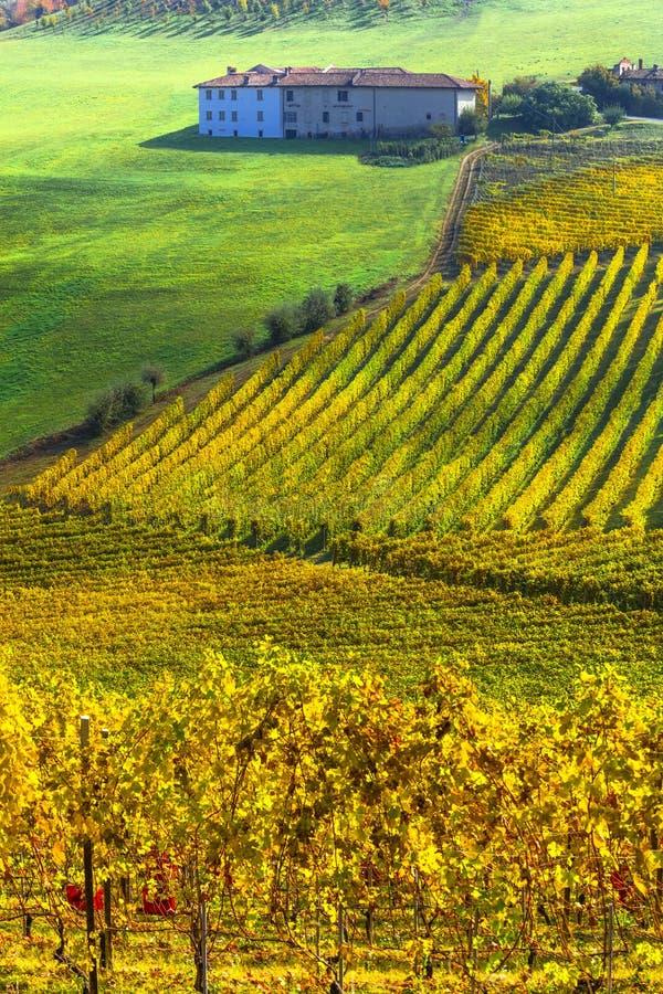 Paisajes rurales de otoño de la hermosa Piemonte Viñas doradas Italia imagen de archivo libre de regalías