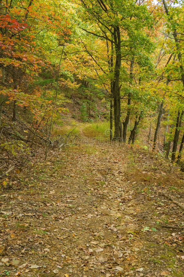 Paisible Woodland Trail photo libre de droits