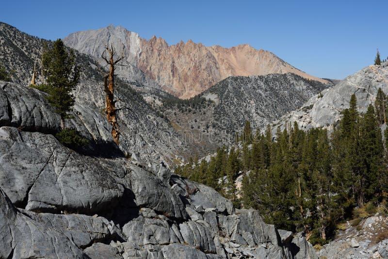 Paiute Crags od Błękitnego Jeziornego śladu, sierra Nevada pasmo, Kalifornia zdjęcie royalty free