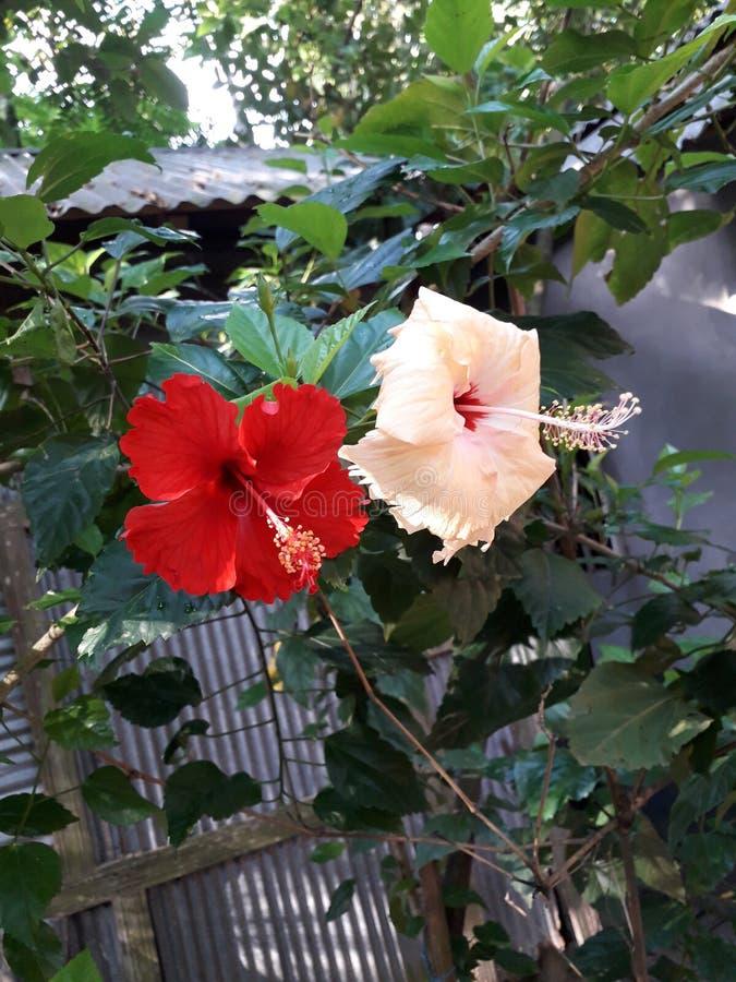 Paix merveilleuse de fleur accrochant sur l'arbre mignon image libre de droits