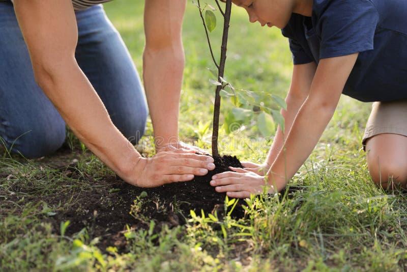 Paizinho e filho que plantam a árvore no parque, close up fotos de stock royalty free
