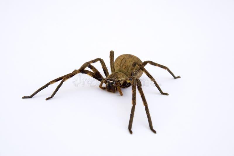 pająk deszcz obraz royalty free