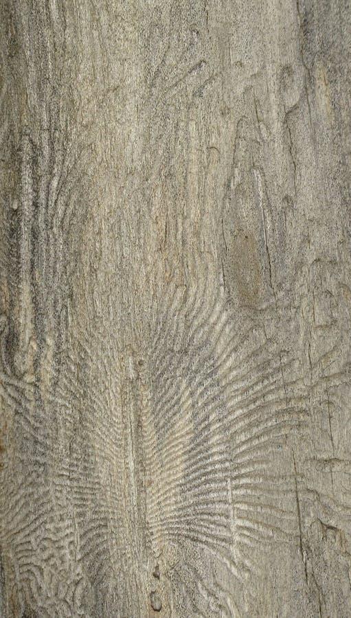 pająk drewniany fotografia stock