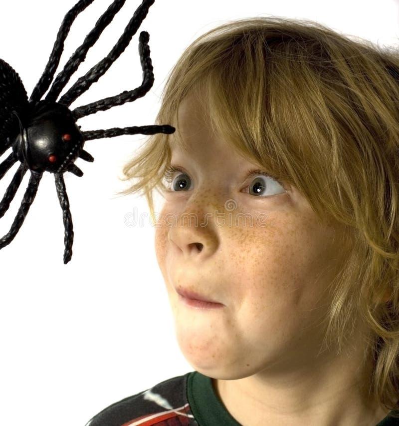 pająk dzieciaka. fotografia royalty free