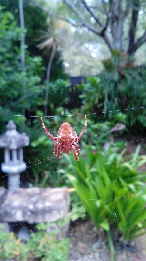pająk jego sieć obrazy stock