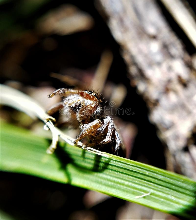pająk malutki zdjęcie royalty free