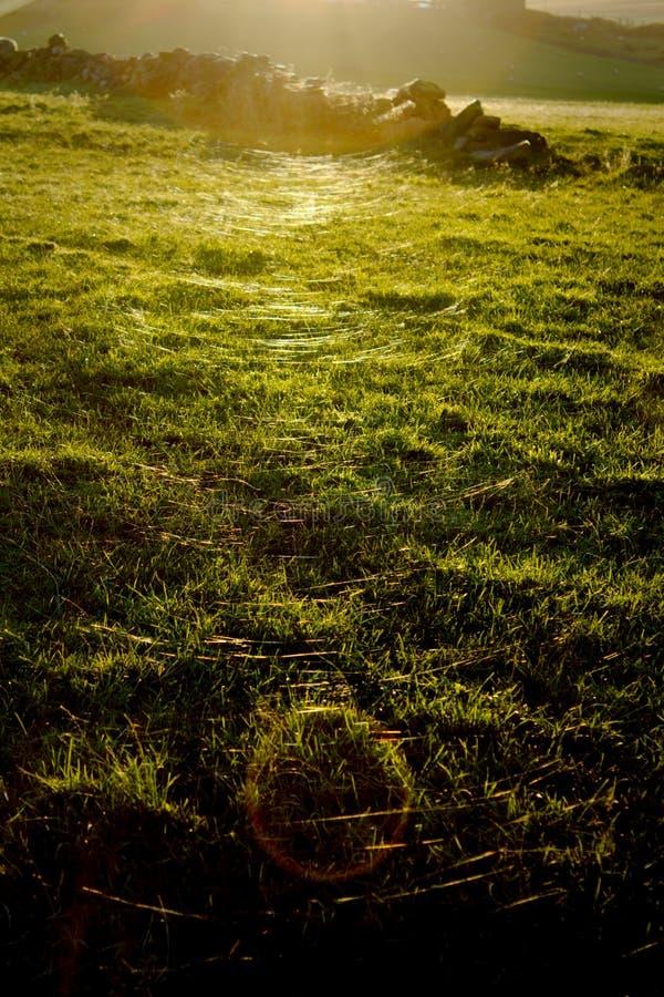 Pająk nici na polu przy zmierzchem fotografia royalty free