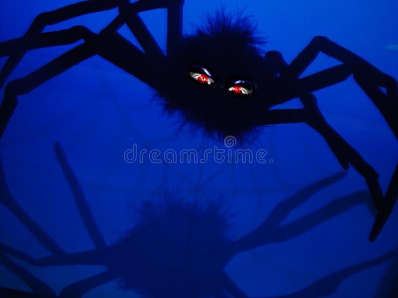 pająk podły fotografia stock