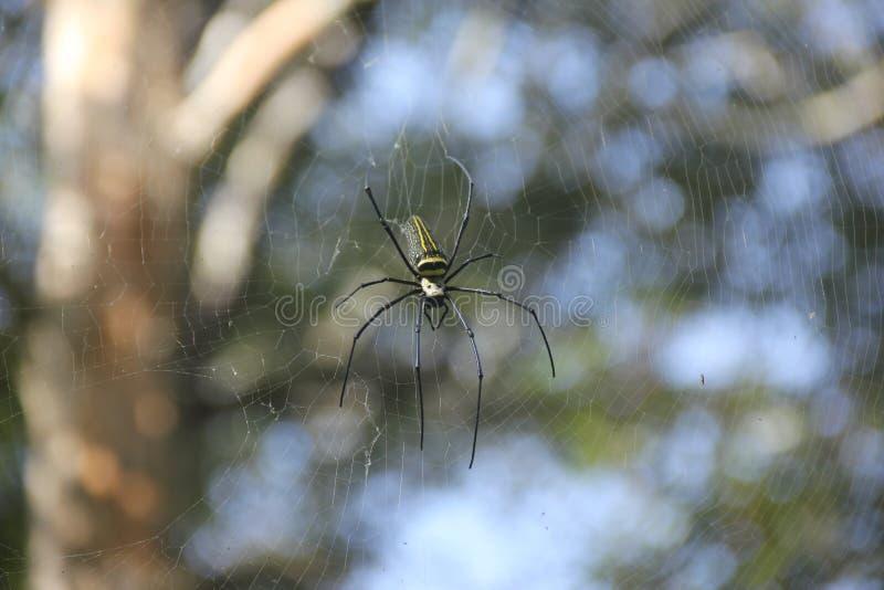 pająk przędąc sieć obraz stock