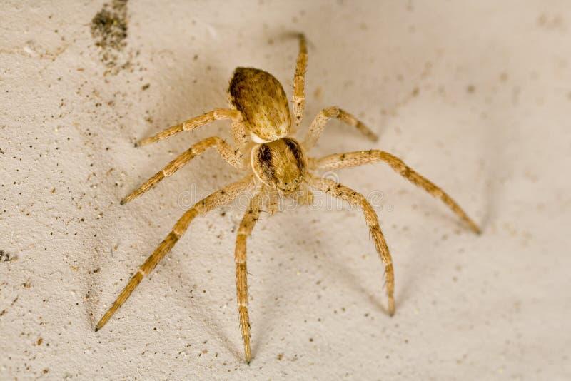 pająk sac zdjęcia stock