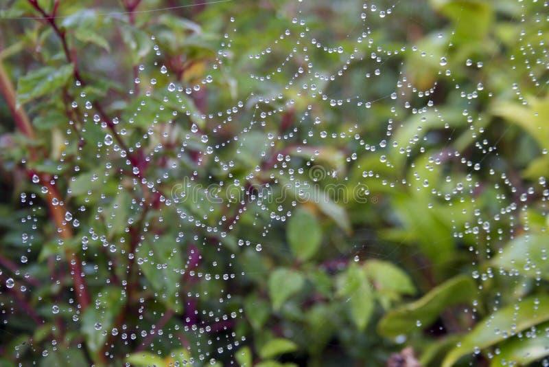 Download Pająk sieć obraz stock. Obraz złożonej z natura, sieć - 28953861