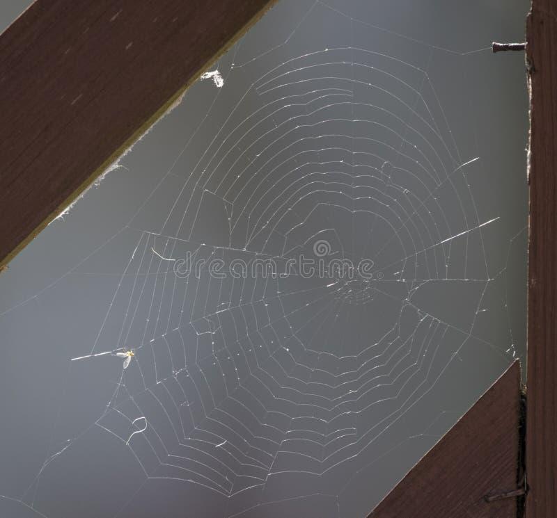 Pająk sieć na ogrodowej bramie obraz royalty free