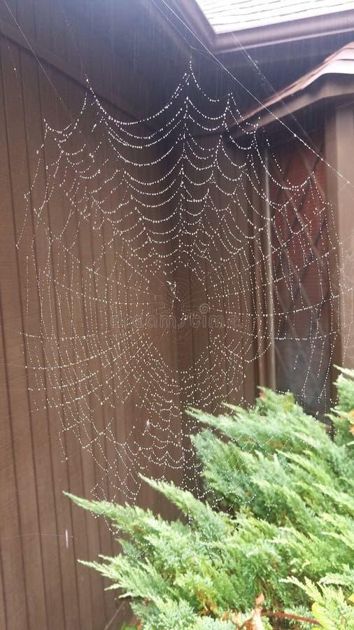 Pająk sieć w deszczu zdjęcia stock