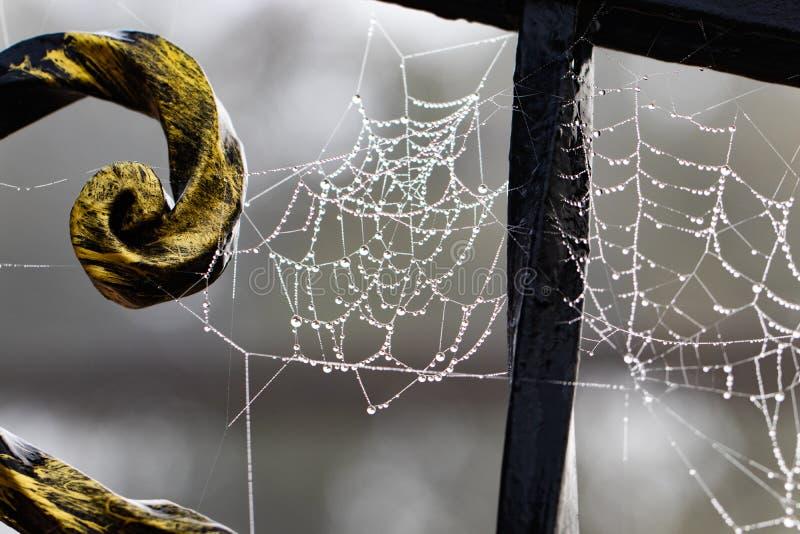Pająk sieć z raindrops na metalu fałszował budowę obraz royalty free