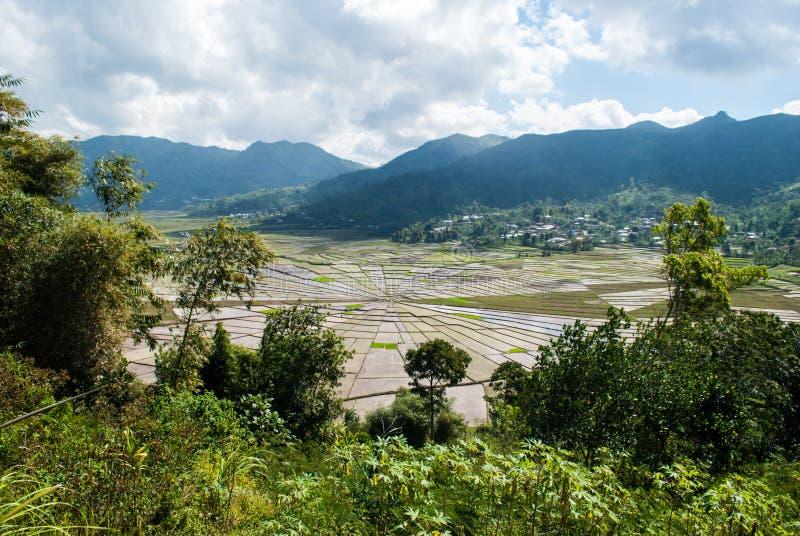 Pająk sieci ricefields w Cancar, Indonezja obraz royalty free