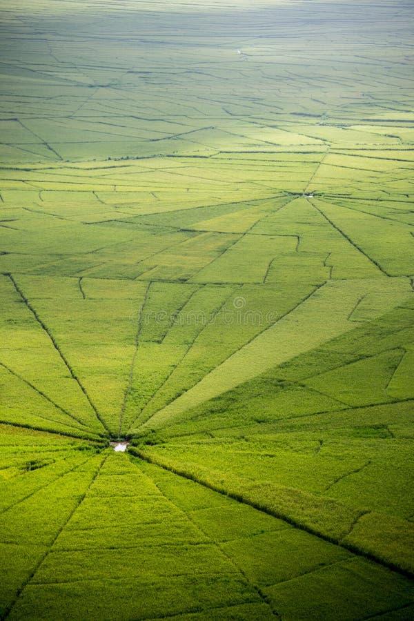 Pająk sieci ryż pole w Ruteng fotografia royalty free