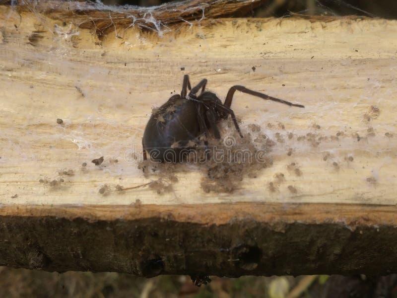 Pająk w lesie zdjęcia royalty free