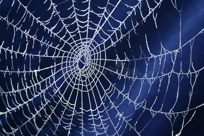 pająk zamarznięta sieć obrazy royalty free