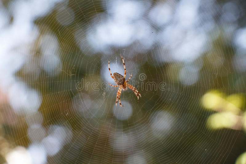 Pająka Araneus w centre spiderweb obrazy stock