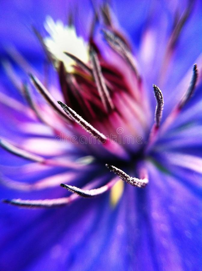 Pająka kwiat zdjęcie stock