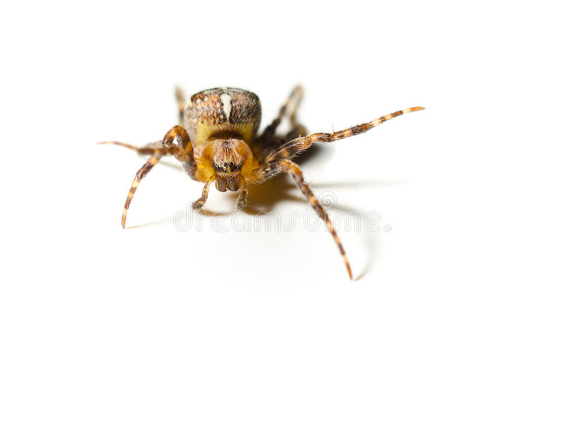 pająka odprowadzenie zdjęcie royalty free