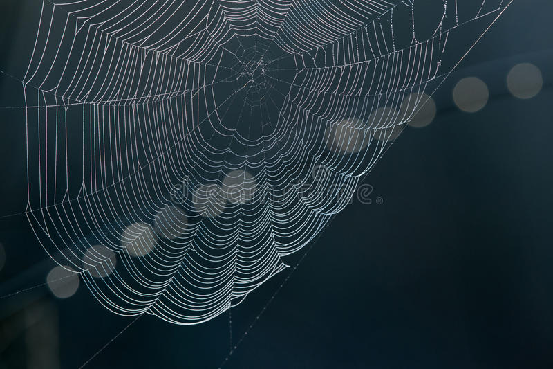 Pająka ` s sieć na ciemnym tle obraz royalty free